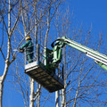 Excavator Attachment - Tree Shear SWMS