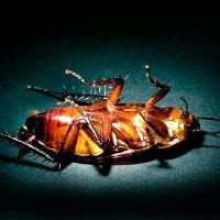 Pest Management - Spraying Pesticides SWMS