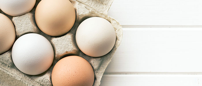 What are the health benefits of egg membrane? - All Force Nutrition