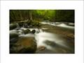 Confluences, Laurel Creek & Little River