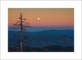 Dead Tree & Moon, Clingmans Dome