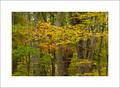 Fall Forest, Deep Creek