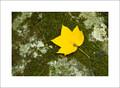 Fall Leaf & Rock