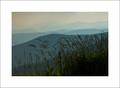 Grasses & Mountains, Clingmans Dome