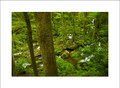 Roaring Fork Creek & Forest