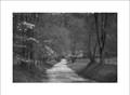 Dogwood, Sparks Lane, Cades Cove - Black & White