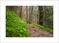Trillium & Trail, Porters Creek Trail