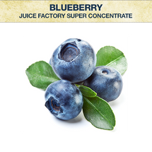 JF Blueberry Super Concentrate