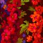Christolfe Floral blue sky scrubs Poppy Scrub Cap