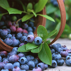 HS Blueberry Hangsen e-Liquid