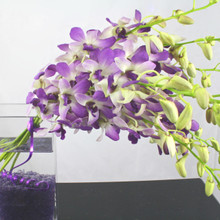 Gorgeous spray of purple orchids in a vase with glass chips.