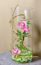 Spectacular collection of orchids contained in a glass vase with stones and vines. A statement piece!