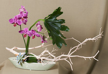 Striking combination of orchids and branch material. Artistic composition