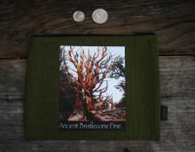 Ancient Bristlecone Pine #818 Medium & Large Hemp Coin Purse