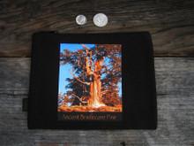 Ancient Bristlecone Pine #806 Sunrise
