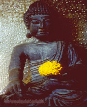 Earth witness Buddha greeting card