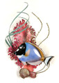 SURGEONFISH METAL WALL SCULPTURE - NAUTICAL WALL ART