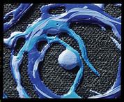 Liquitex - String Gel
