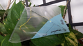 iFlite kites - iFlite MiniFlite