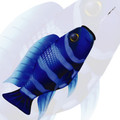 New Tech Kites - Blue Zebra fish windsock