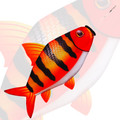New Tech Kite - Red Zebra fish windsock