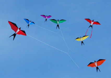 bird-kites-photo-62015.jpg