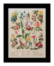 Familiar Flowering Plants - Framed Art Print
