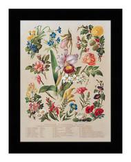 Familiar Flowering Plants - Framed Art Print