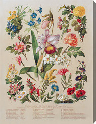 Familiar Flowering Plants - Stretched Canvas Art Print
