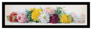 Study of Chrysanthemums - Framed Art Print