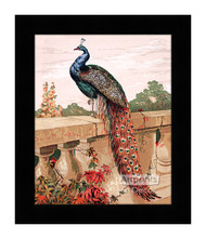Peacock - Framed Art Print
