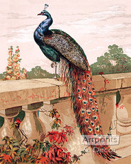 Peacock by Harrison Weir - Art Print