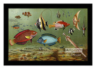 Fish Aquarium II - Framed Art Print