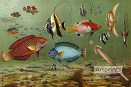 Fish Aquarium II - Art Print