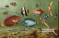 Fish Aquarium II - Stretched Canvas Art Print