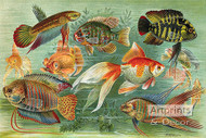 Fish Aquarium III - Art Print