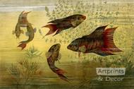 Fish Aquarium - Art Print