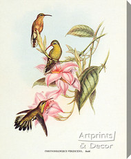 Chrysobronchus Virescens by John Gould - Stretched Canvas Art Print