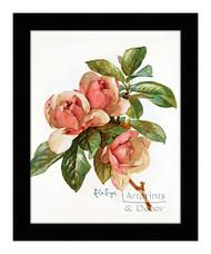 Pink Magnolia Blossoms - Framed Art Print