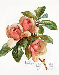 Pink Magnolia Blossoms by Pink Magnolia Blossoms - Art Print