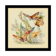 Butterflies & Cape Heath - Framed Art Print