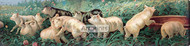 A Yard of Pigs by William De La Montagne Cary - Stretched Canvas Art Print