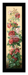 Study of Roses - Framed Art Print