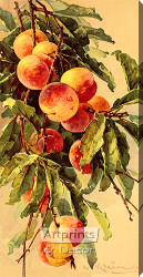 Peaches by Catherine Klein - Stretched Canvas Art Print