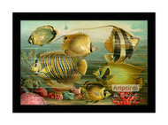 Coral Reef Fish - Framed Art Print