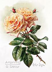 Two Yellow Roses by Paul de Longpre - Art Print