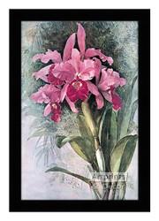 Orchids by Paul de Longpre  - Framed Art Print