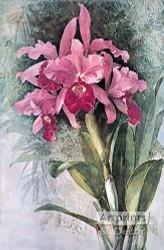 Orchids by Paul de Longpre - Art Print