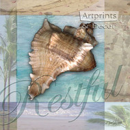 Restful Shell by Todd Williams - Art Print