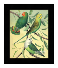 Love Birds - Framed Art Print